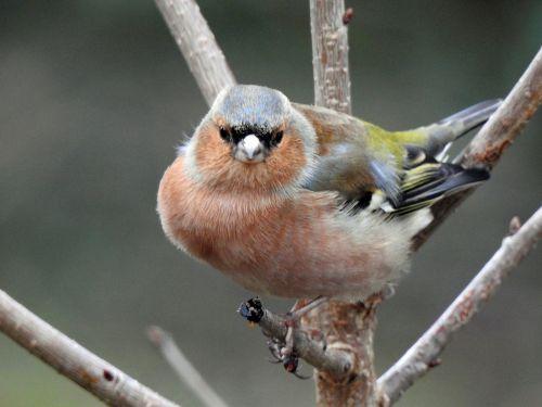 bird tree nature