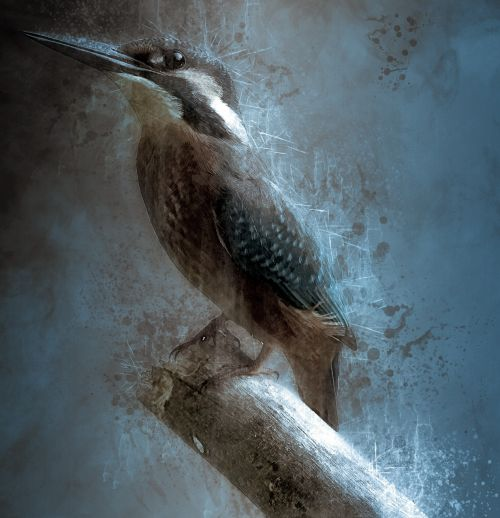 bird kingfisher bill