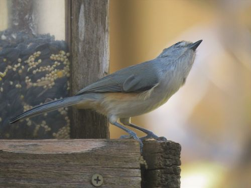 bird wildlife unusual