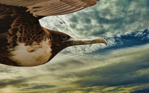 bird flying animal
