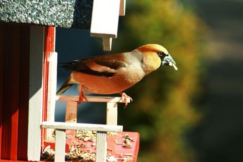 bird foraging close