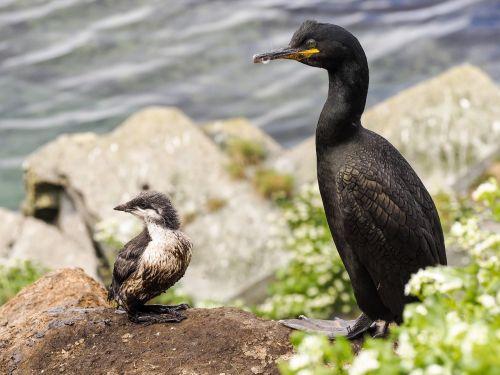 bird chick nature
