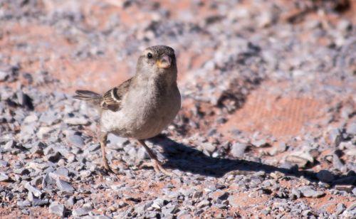 bird desert southwest