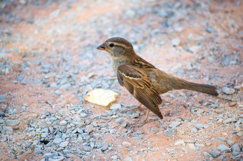 bird desert animal