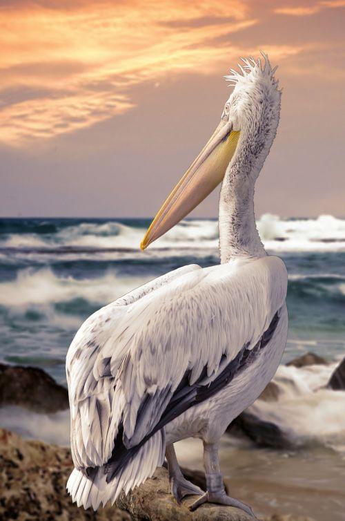 bird feather nature
