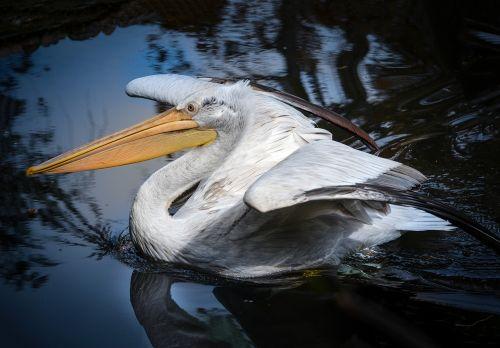 bird animal world waters