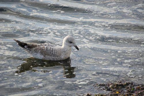 bird body of water nature
