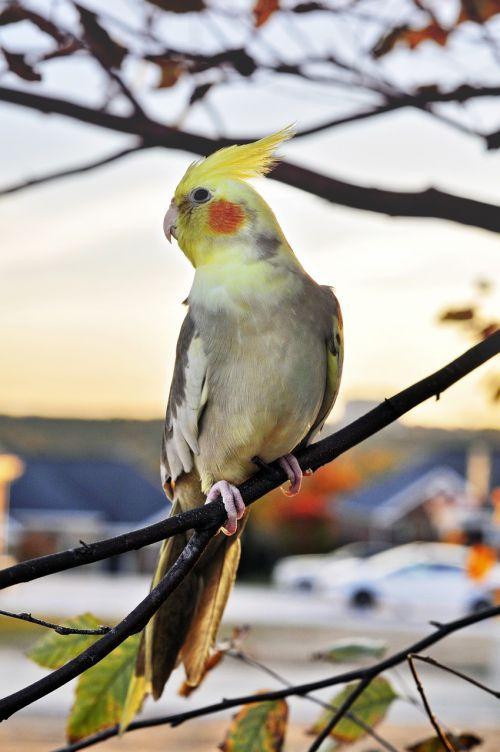 bird wildlife animal