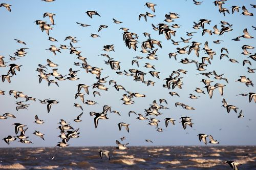 bird flight animal world
