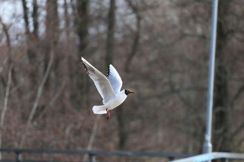 bird seagull fly