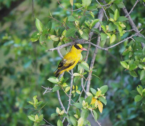 bird wildlife outdoors