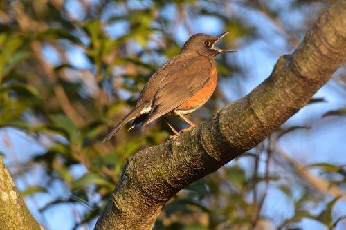 bird wild animals natural