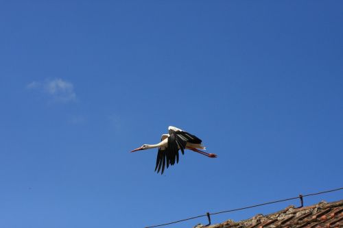 bird sky nature