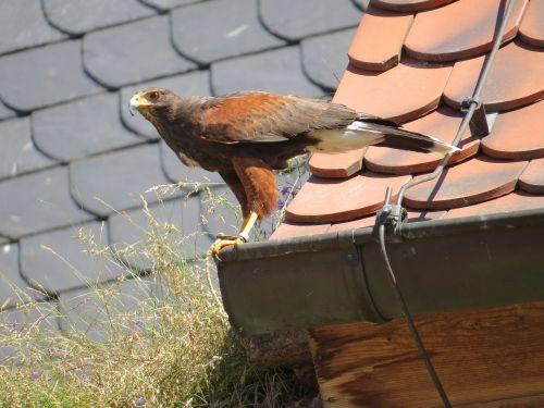 bird nature animal