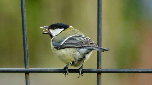 bird fauna nature