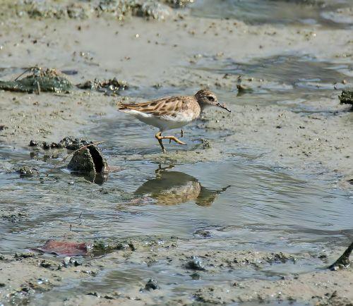 bird wildlife water