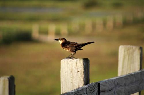 paukštis, lauke, laukinė gamta, gamta, gyvūnas, žolė, vanduo, iš šono, dienos šviesa, laukiniai, parkas, be honoraro mokesčio