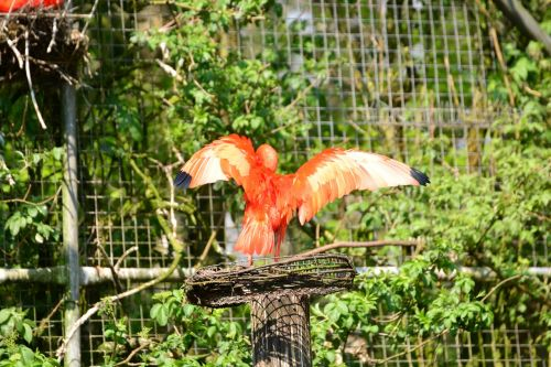 bird red bird animals