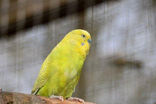 bird  tropical  nature