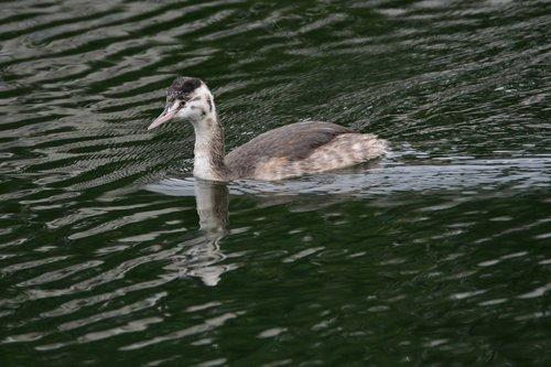 bird  waters  wild animals