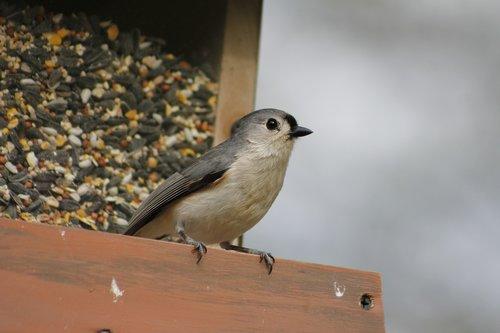bird  outdoors  nature