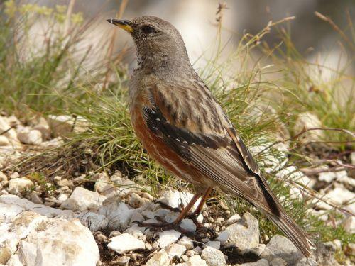 bird mountain bird animal