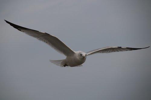 bird  wildlife  nature
