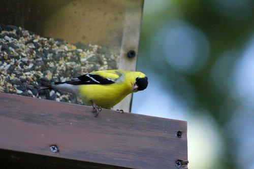 bird  outdoors  wildlife