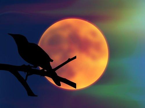 bird  mockingbird  moon