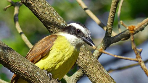 bird  wild  tropical bird