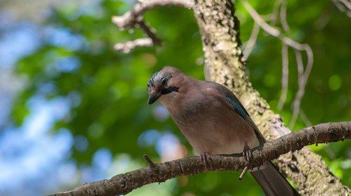 bird  forest  tree