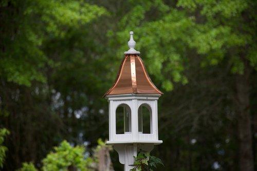 bird  feeder  backyard