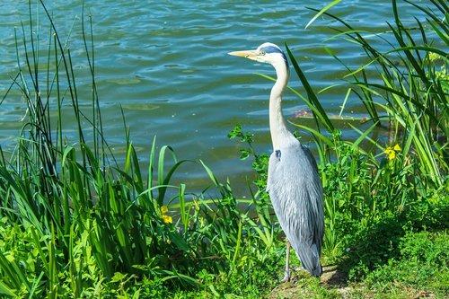 bird  bank  water
