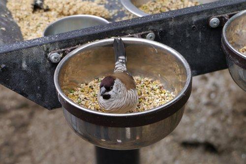 bird  eating  birdwatching