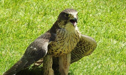 bird  nature  green
