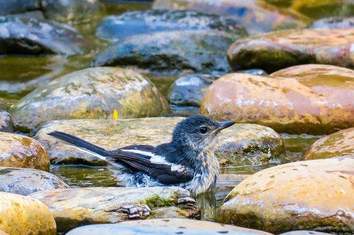 bird  pet  feather