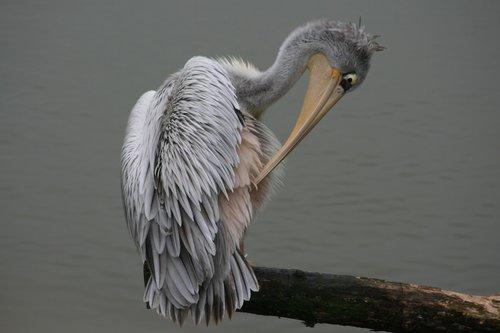 bird  bill  nature