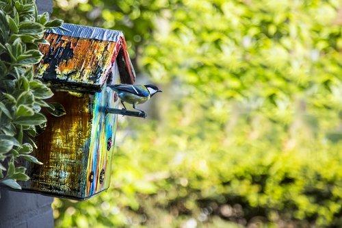 bird  birdhouse  garden