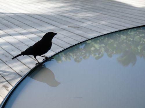 bird table deck