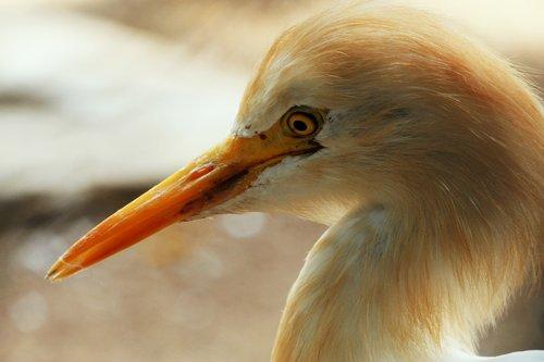 bird  bird-watching  long
