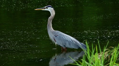 bird  sinner  bayou