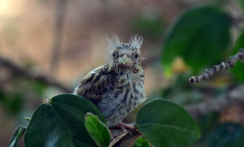 bird  chicks  nest escape