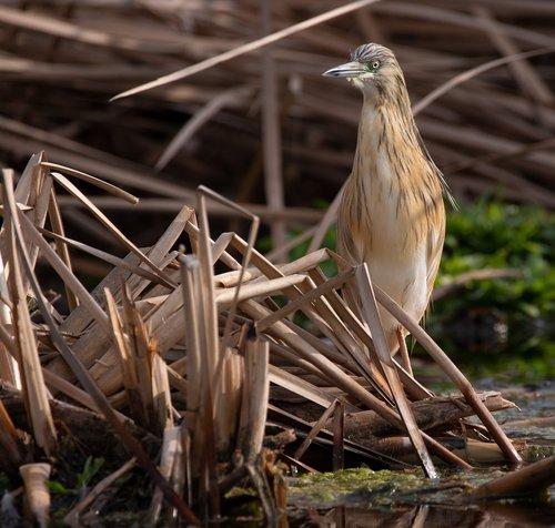 bird  nature  birdwatching