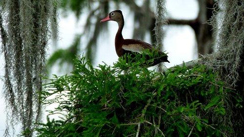 bird  bayou  louisiana