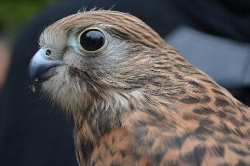 bird  nature  bill
