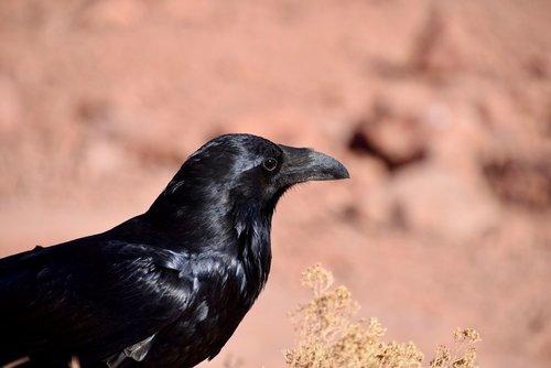 bird  black  black bird