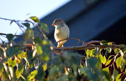 bird  tree  fink