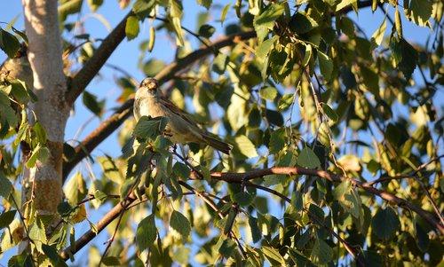 bird  fink  tree
