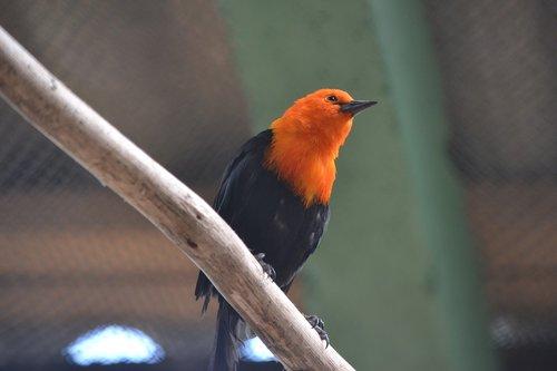 bird  uruguay  latin america