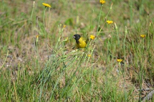 bird  uruguay  summer